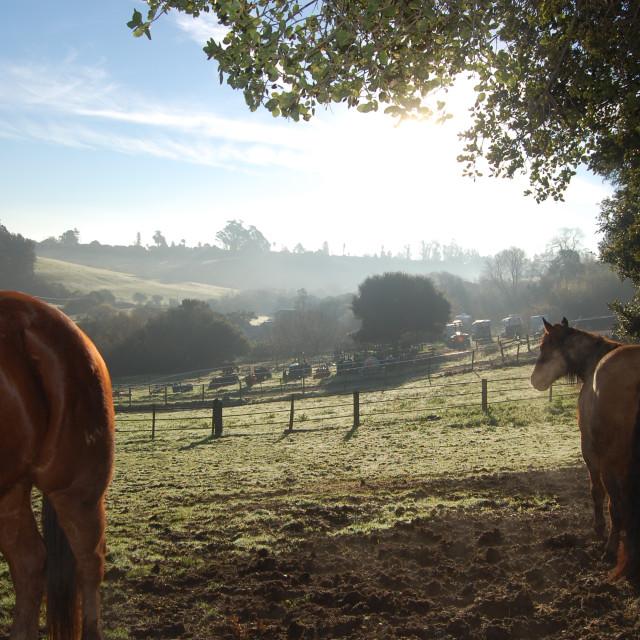 """""""Sunrise Horses"""" stock image"""