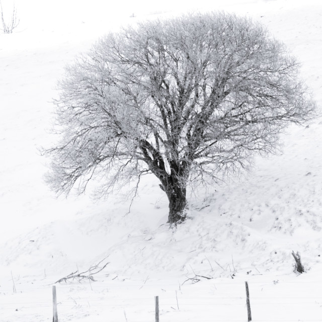 """One tree - auvergne - france"" stock image"