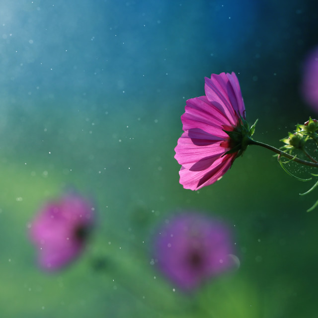 """""""The flowers from my garden are always beautiful"""" stock image"""