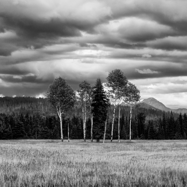"""North Fork Prairie in Black and White"" stock image"