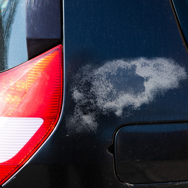 """""""close up on defective varnish in the car"""" stock image"""