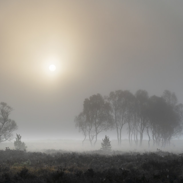 """A misty autumn sunrise over Strensall Common Nature reserve near York, North..."" stock image"