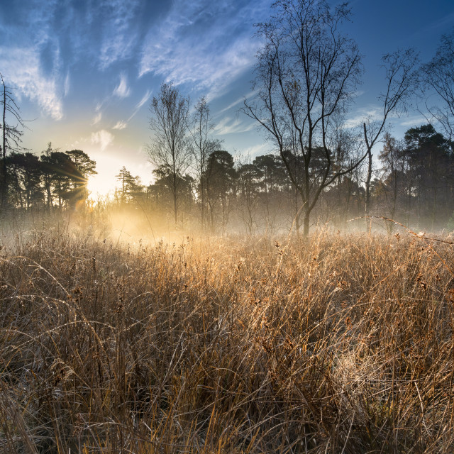"""Dawn light over Strensall Common Lowland Heath, Nature Reserve, near York,..."" stock image"