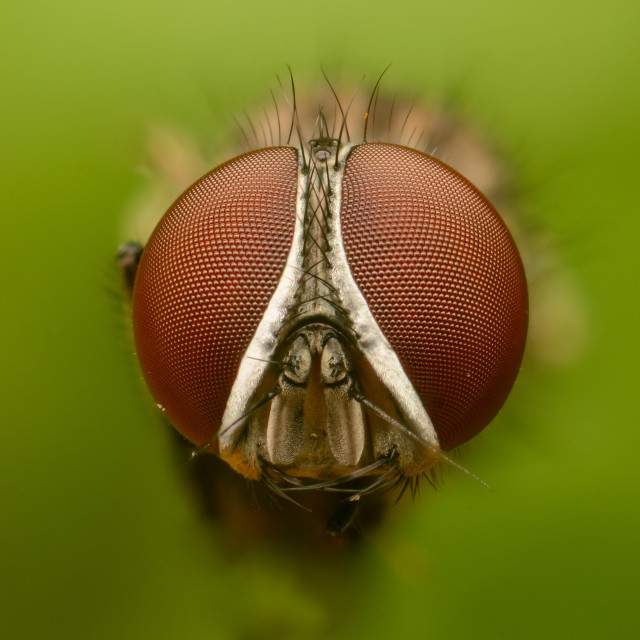 """Fly Portrait"" stock image"