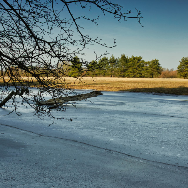 """Frozen branch of the Bug river"" stock image"