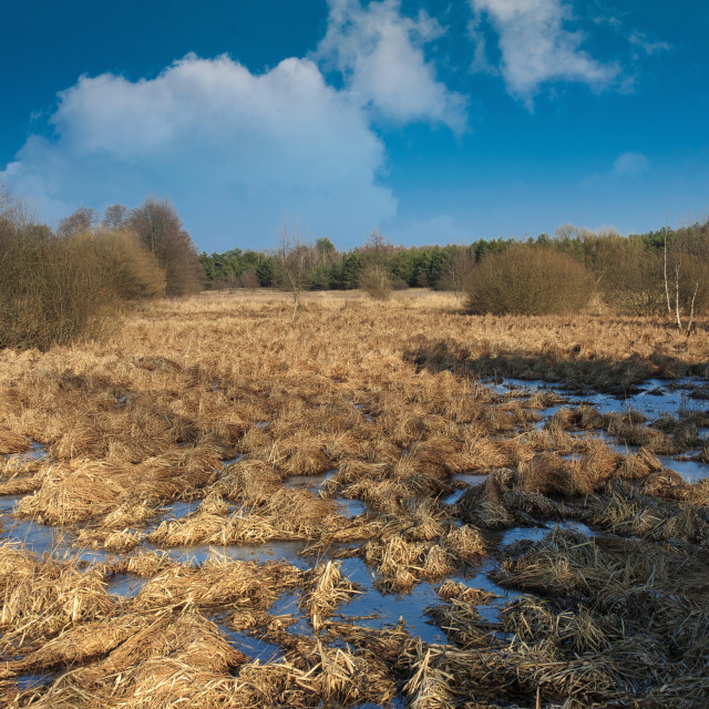 """Swamps and bogs in the early spring"" stock image"