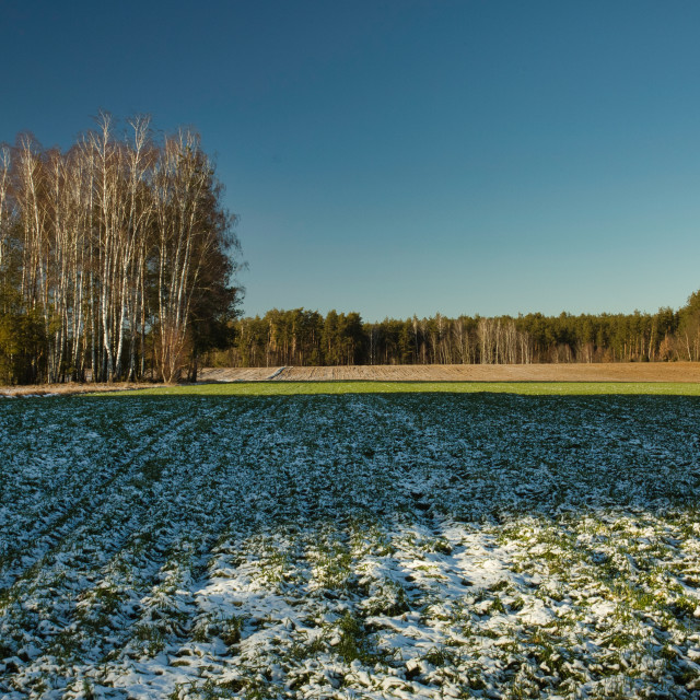 """Fresh snow on the fields in early spring"" stock image"