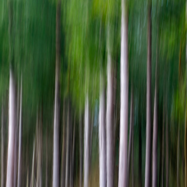"""Woodland abstract"" stock image"
