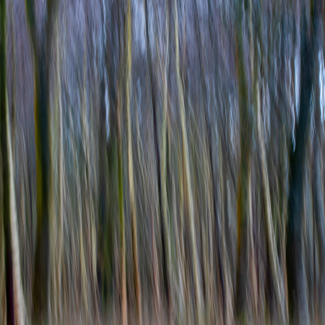 """Abstract woodland"" stock image"