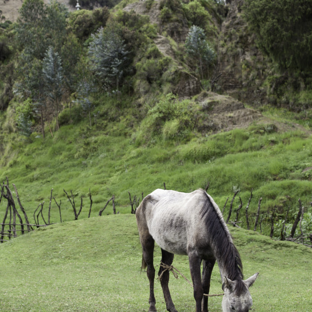 """Horse grazing in valley near Lake Wenchi in Ethiopia"" stock image"