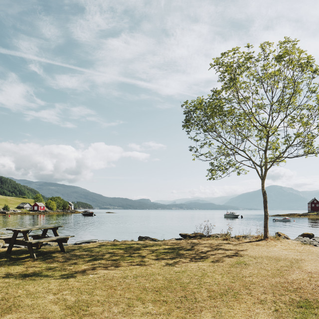 """""""A lone tree and picnic table in a summer fjord landscape in Norway."""" stock image"""