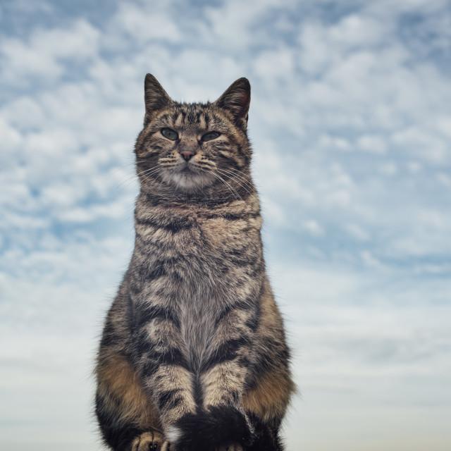 """Celestial cat"" stock image"