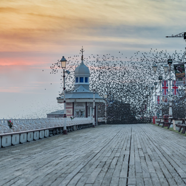 """Starlings Roosting"" stock image"