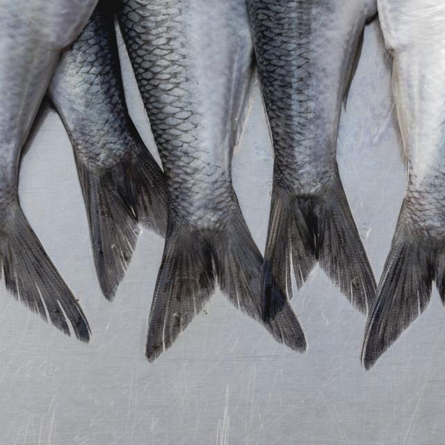 """Fresh herrings tails macro full frame crop"" stock image"