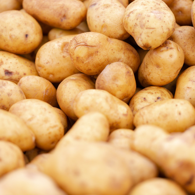 """""""Clean, washed potatoes in light brown, yellow colour on market s"""" stock image"""