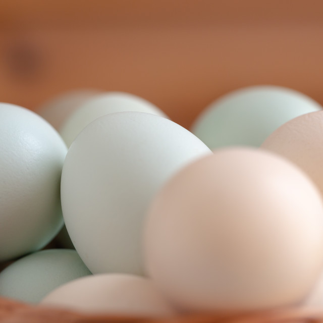 """Plain multicoloured free range eggs on wooden plate"" stock image"