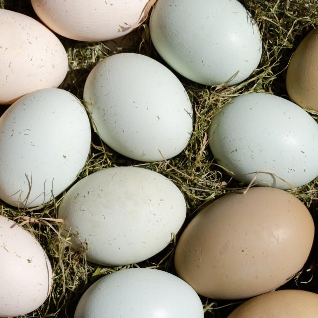 """Plain multicoloured free range eggs on hay as Easter decoration"" stock image"