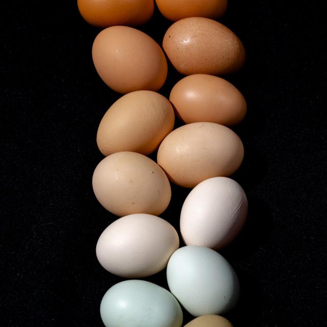 """""""Plain multicoloured free range eggs on bold black background"""" stock image"""