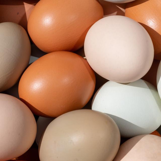 """""""Plain multicoloured free range eggs full frame background"""" stock image"""