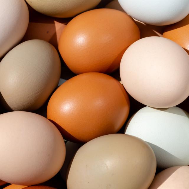 """""""Plain multicoloured free range eggs full frame top view backgrou"""" stock image"""