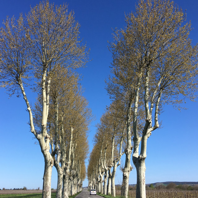 """A long straight tree lined road in Aude France"" stock image"
