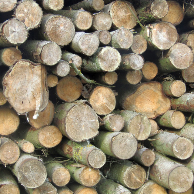 """Symmetrical logs"" stock image"