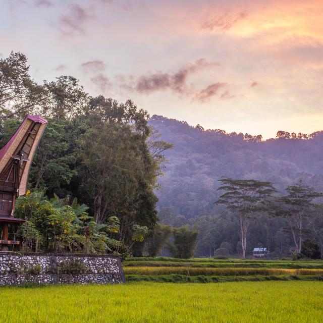 """Torajan house amid rice fields at dusk"" stock image"