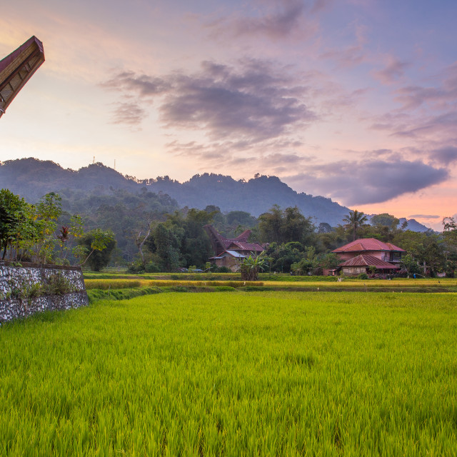 """""""Torajan houses and rice fields at dusk"""" stock image"""