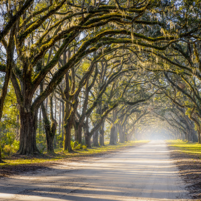 """Southern Oak Avenue"" stock image"