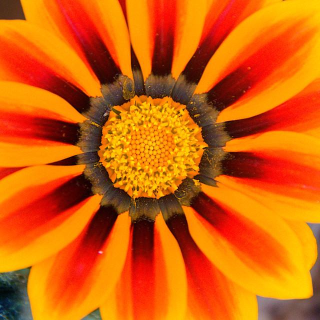 """""""Close-up of Orange Flower"""" stock image"""