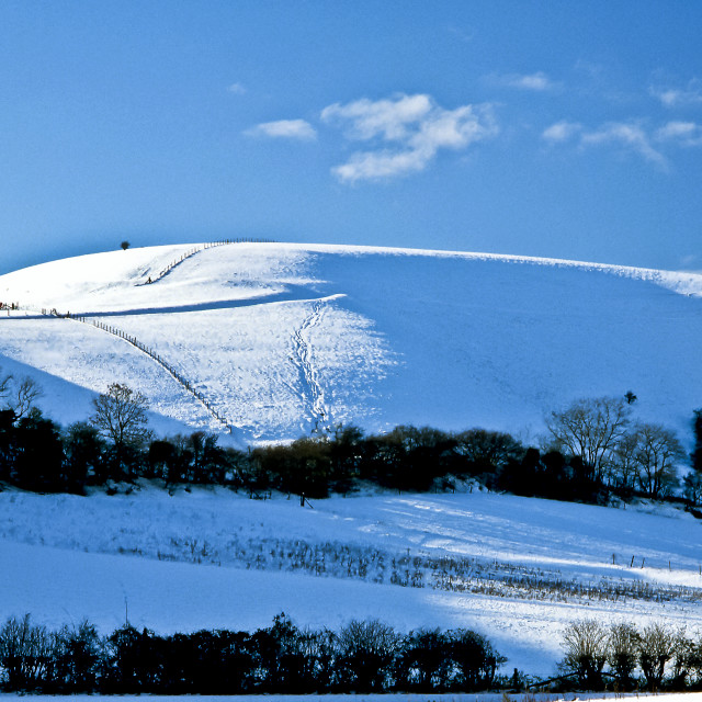 """Melbury Hill in Winter"" stock image"