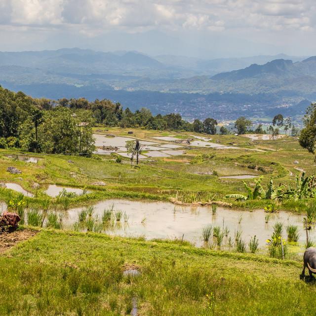 """Torajan landscape"" stock image"