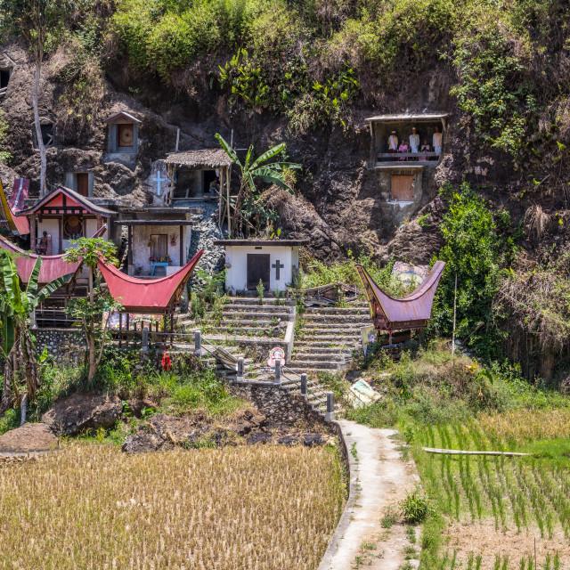 """Hanging graves in Tana Toraja,Sulawesi, Indonesia"" stock image"