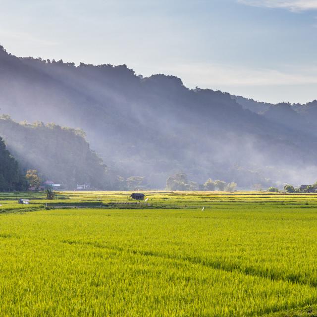 """Rice fields in Tana Toraja"" stock image"