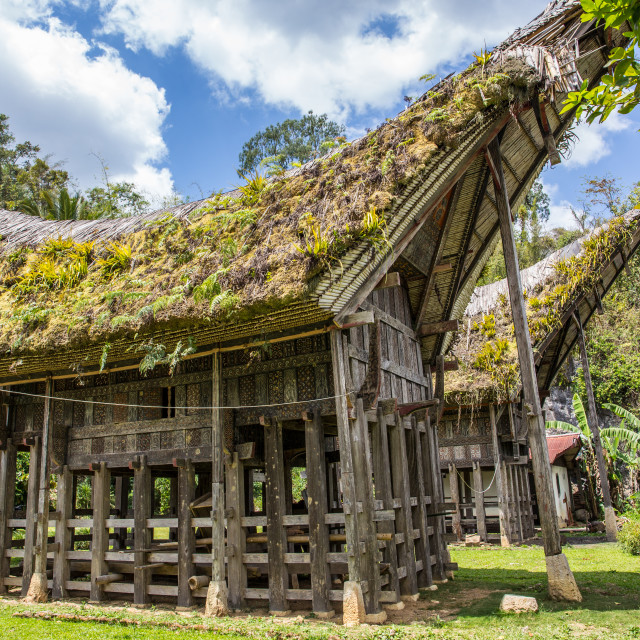 """""""Torajan houses in the countryside"""" stock image"""