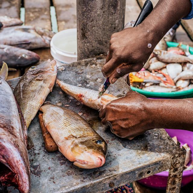 """Preparing the fish"" stock image"