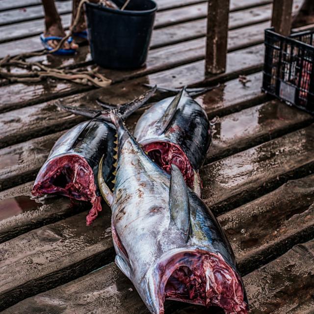 """""""Yellowfin Tuna"""" stock image"""