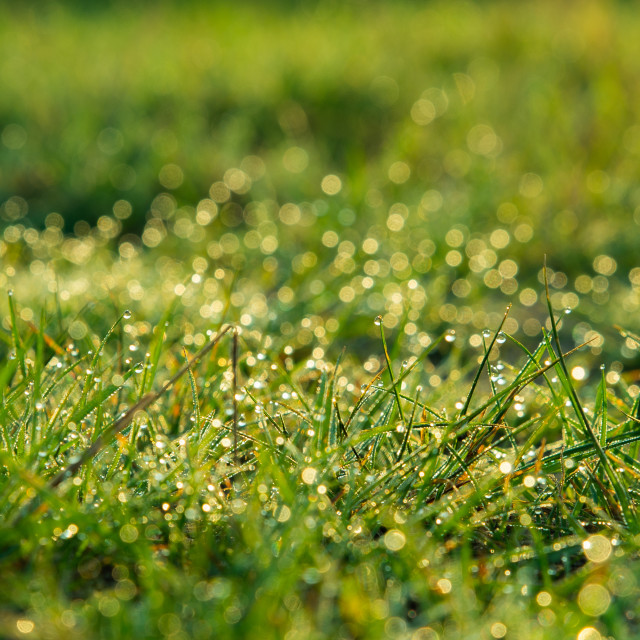 """""""background of dew drops on bright green grass"""" stock image"""