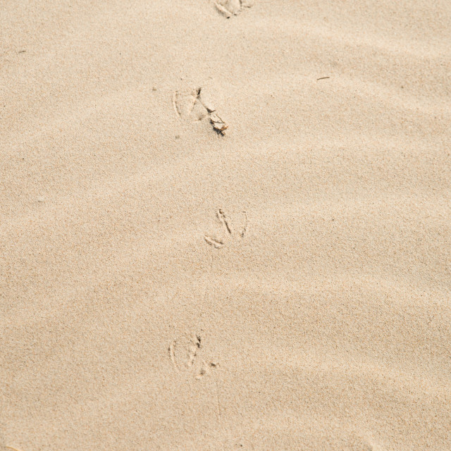 """""""sand texture or background, dune"""" stock image"""