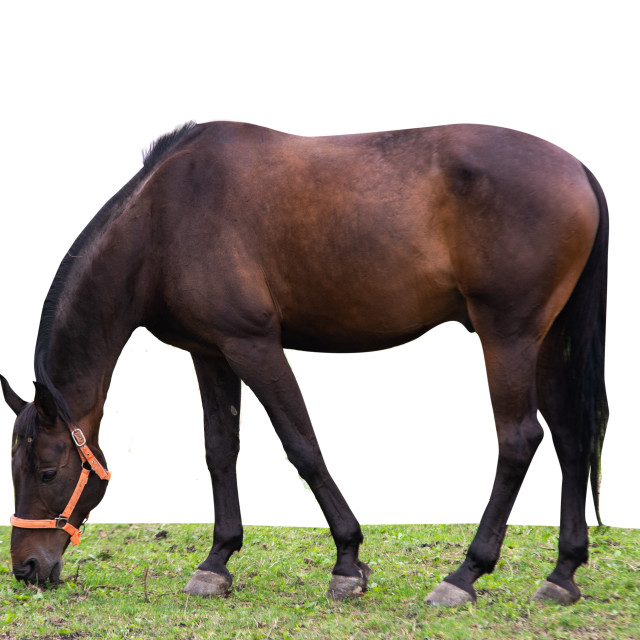 """""""close up on horse in the pasture"""" stock image"""