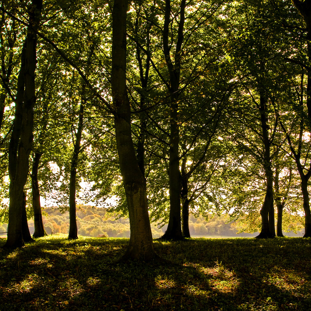 """Trees and Dappled Light"" stock image"