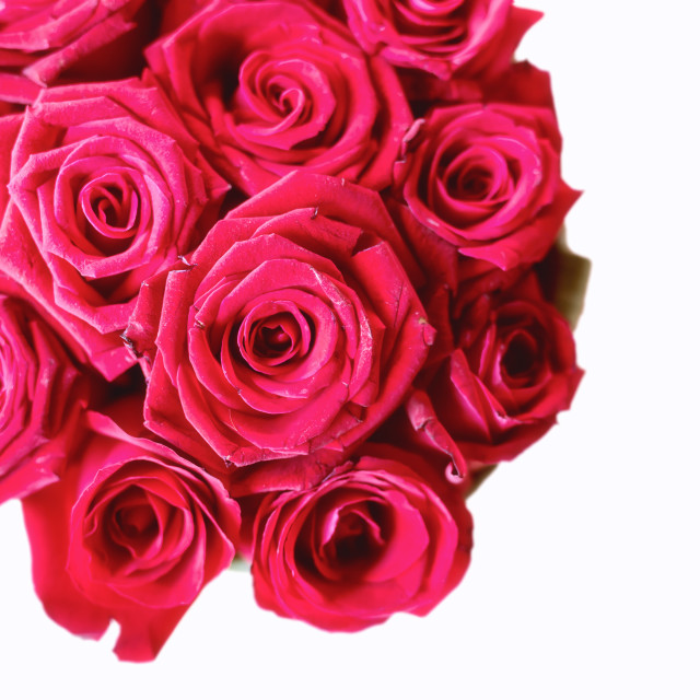 """pink roses bouquet isolated on white"" stock image"
