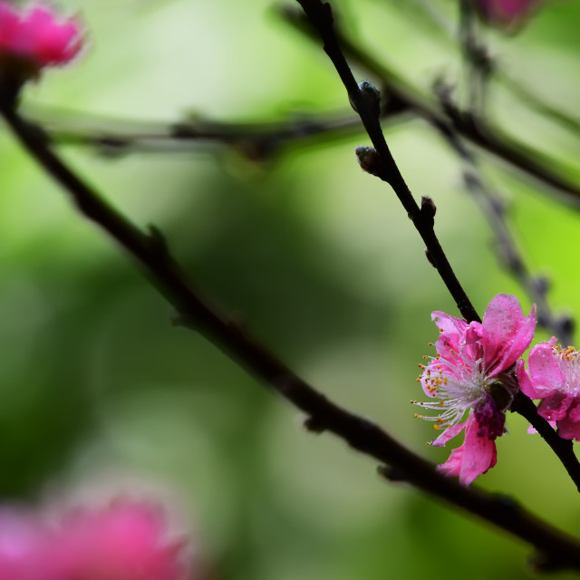 """""""Spring colors"""" stock image"""