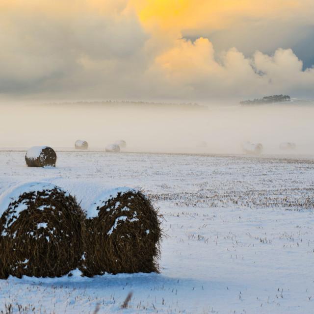 """Winter field"" stock image"