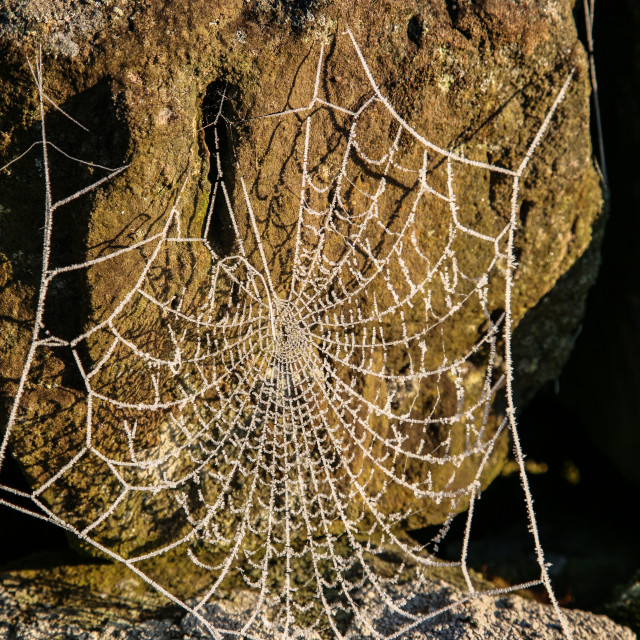 """""""Spiders web with frost"""" stock image"""