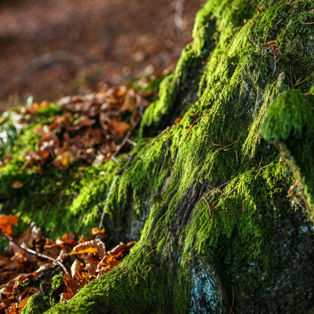 """""""Moss covered Rock"""" stock image"""