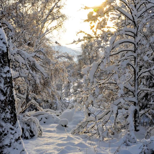 """Winter Woodland"" stock image"