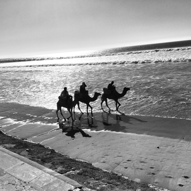 """""""Three camels on the shore"""" stock image"""