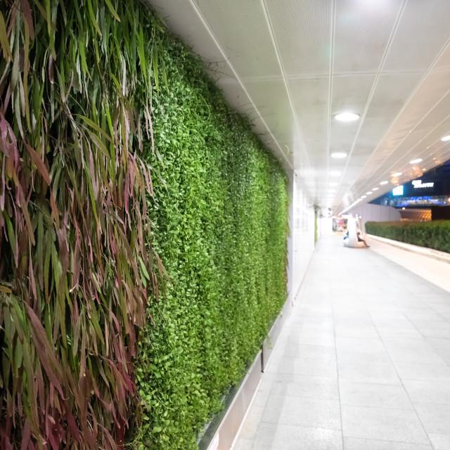 """vegetal wall - Bangkok"" stock image"