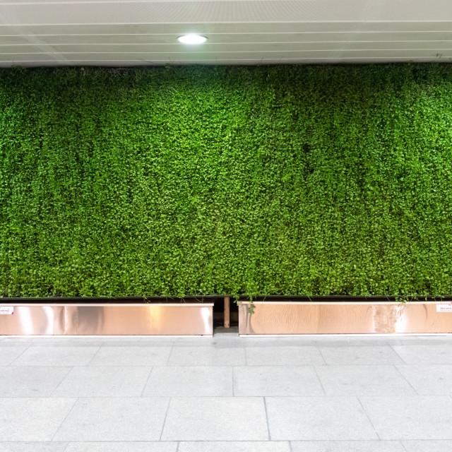 """""""urban vegetal facade"""" stock image"""